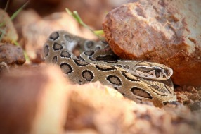 snake-rescue-call-10-550