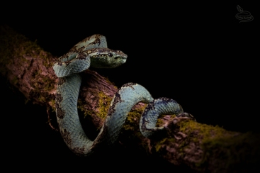 snake-rescue-call-15-550