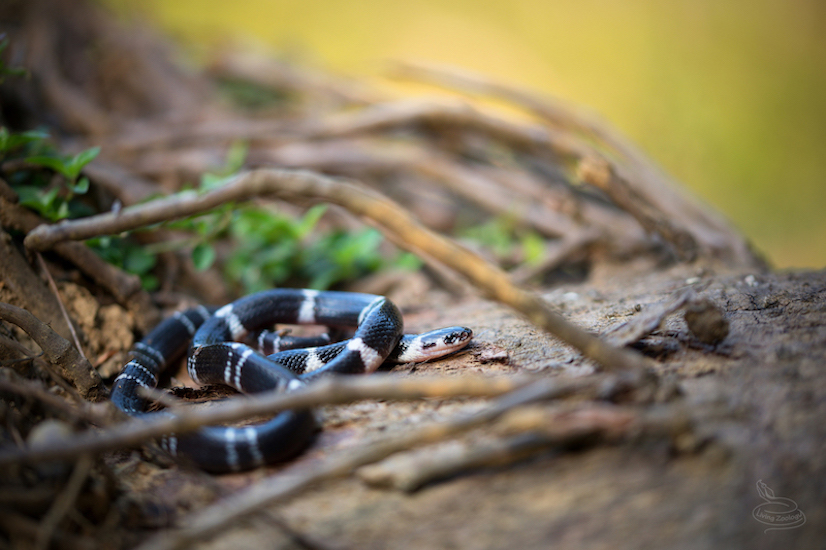 snake-rescue-call-26-550