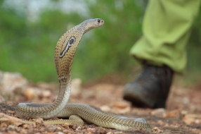 snake-rescue-call-3-550