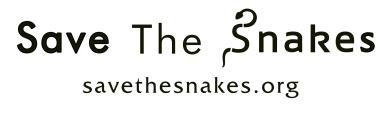STS-International-logo-550