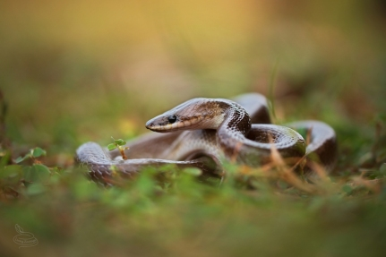 snake-rescue-call-32